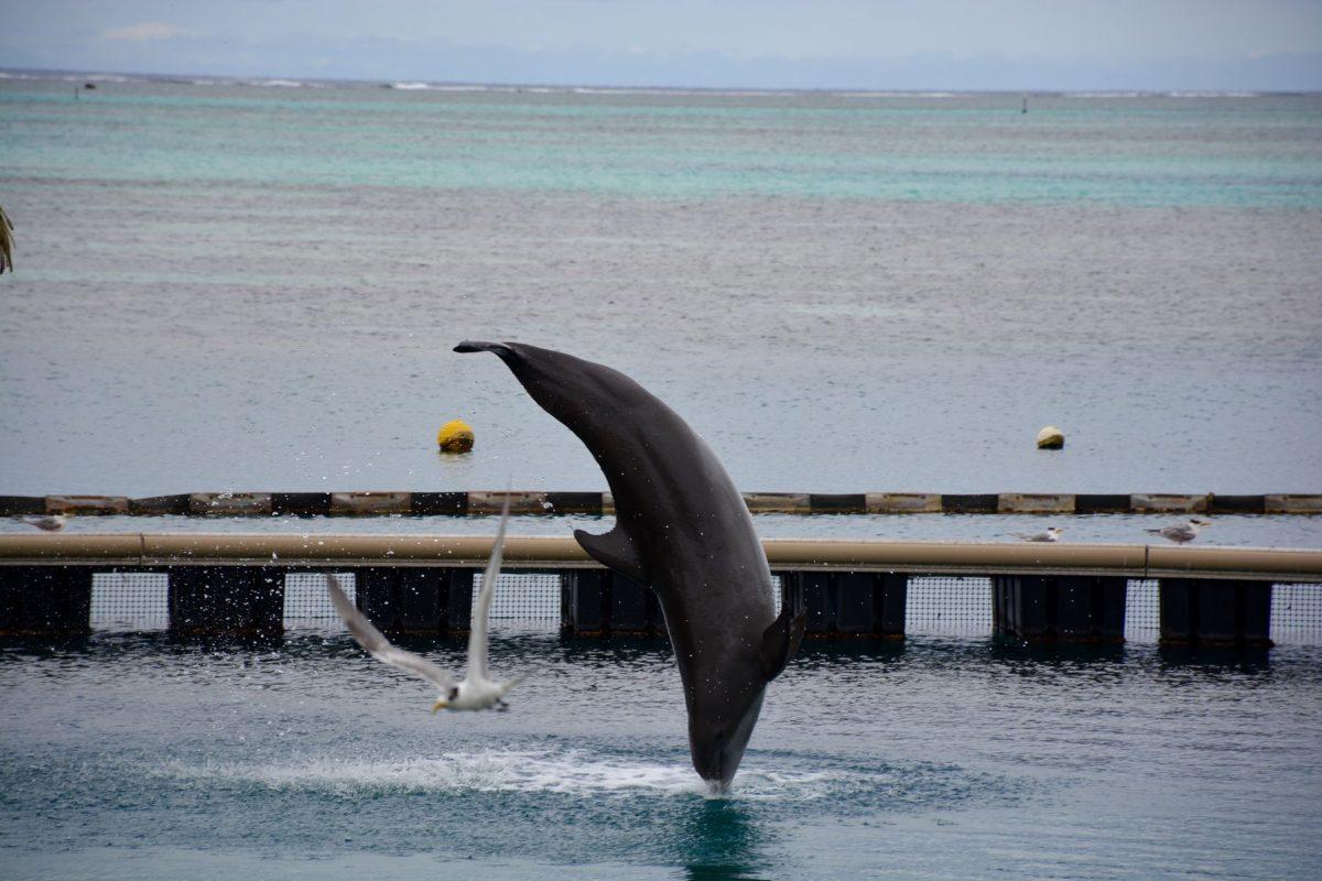 nouvelles vagues rencontre avec les dauphins